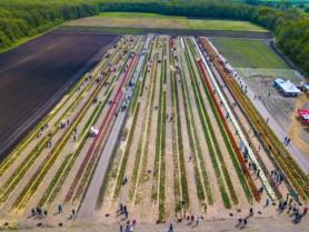 Тюльпановий фестиваль на Ковельщині офіційно завершився