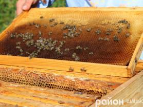У Шацькому лісовому коледжі хочуть налагодити виробництво бджолопавільйонів
