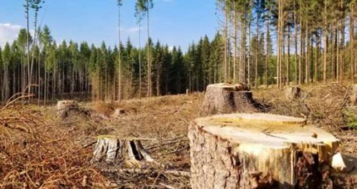 Повалений ліс
