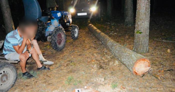На Камінь-Каширщині зафіксували два випадки самовільної порубки лісу.