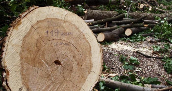 Лісгосп заплатить штраф за незаконну порубку лісу
