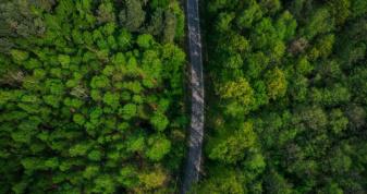Ліси Володимирщини