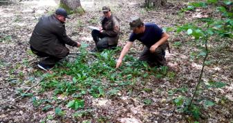 У Цуманській пущі перевірили стан дубових лісів