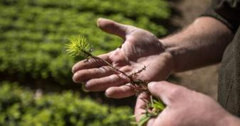 Шачан запрошують спільно садити ліс та допомагати онкохворим