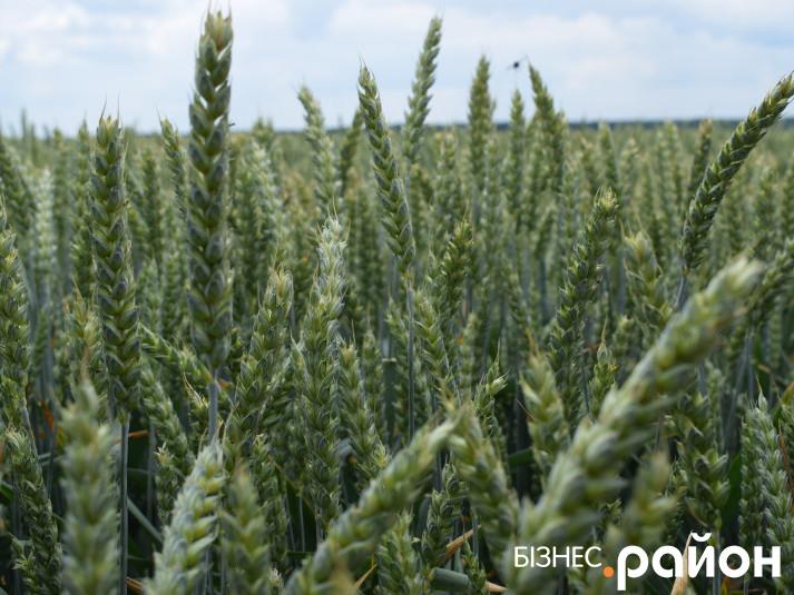 День поля компанія «Волинь-зерно-Продукт»