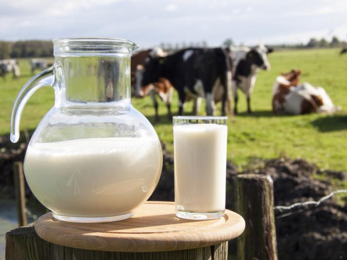 У центрі зайнятості презентував проект зі створення сімейних молочних ферм / Фото ілюстративне
