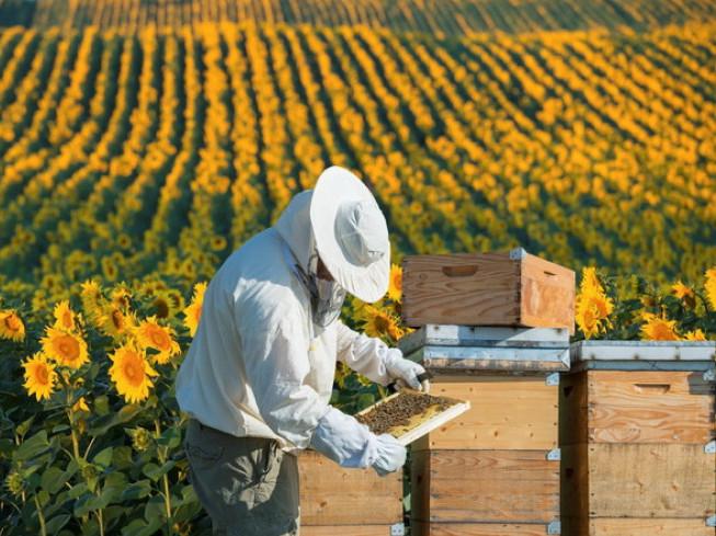 Маневичанам розповіли про ефективне ведення сільського господарства