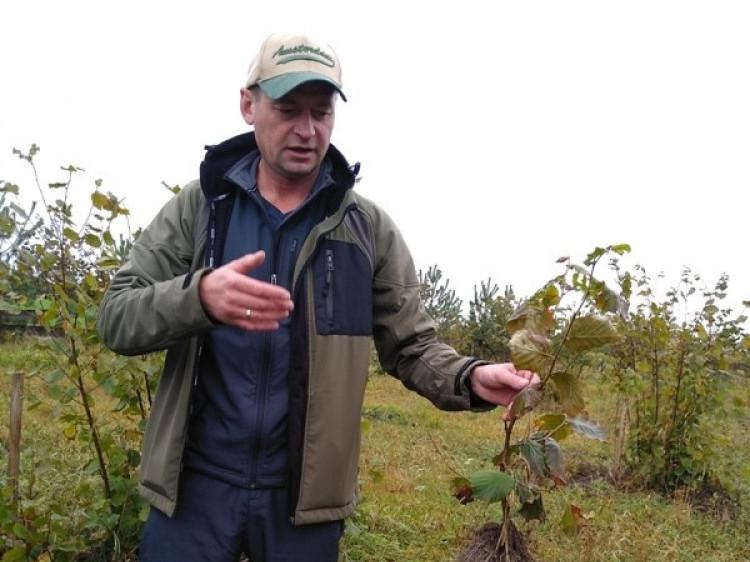 Богдан Панасюк розповідає про особливості вирощування фундука