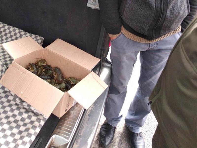 У Ковелі знову продавали раків без документів