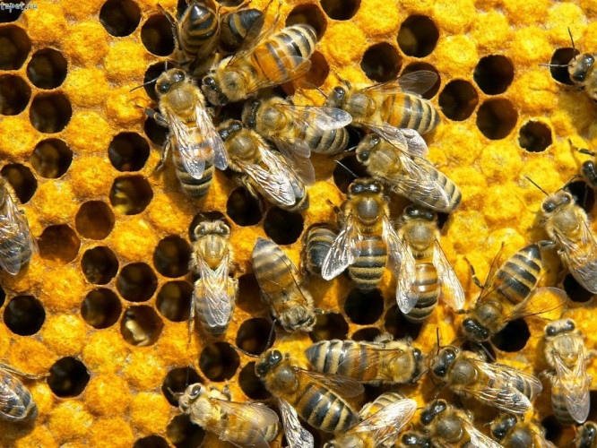 Уряд вперше запровадив державну підтримку бджільництва - Район Бізнес