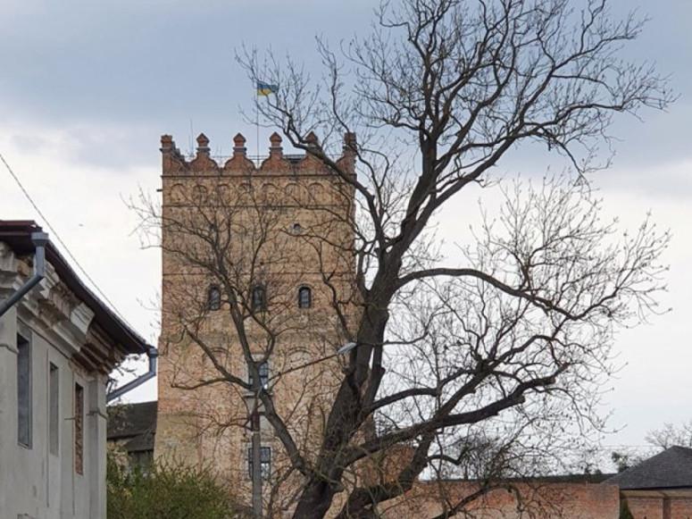 На порятунок Лесиного ясена у Луцьку виділили додаткові кошти