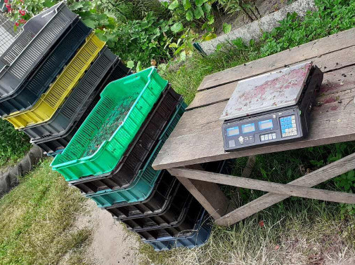У Тойкутській та Доротищенській сільрадах перевірили заготівельників чорниці