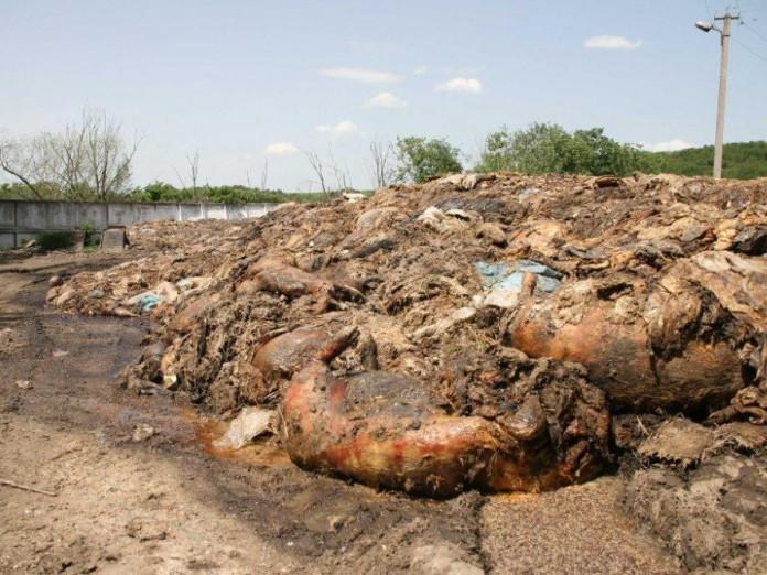 Результат пошуку зображень за запитом мясні відходи