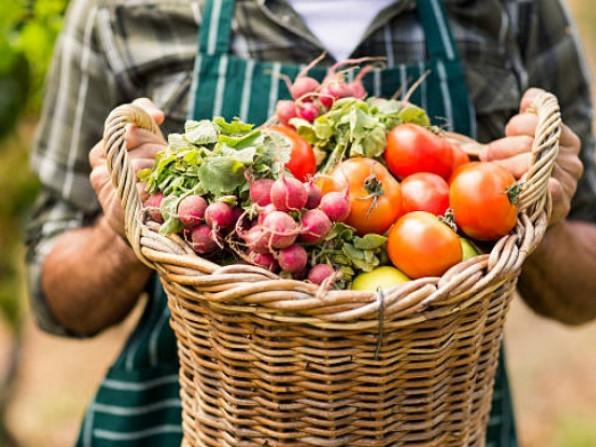 У Рожищанському районі працює 30 сільськогосподарських товаровиробників