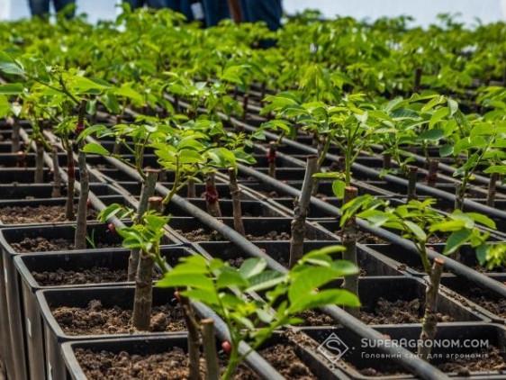 Садівникам компенсуватимуть 80% вартості саджанців