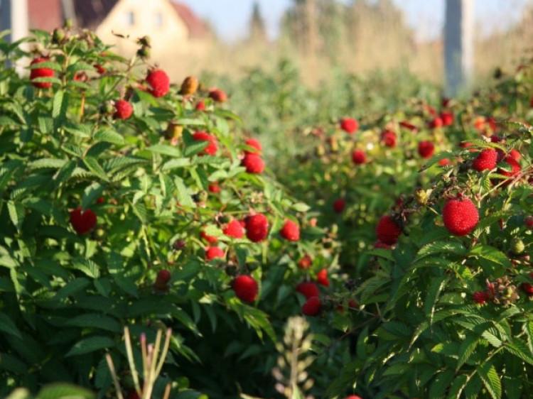 На Волині започаткують перший в Західній Україні садівничо-городницького кооперативу