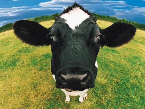 За новий тваринний комплекс аграрії можуть отримати до 150 мільйонів гривень компенсації