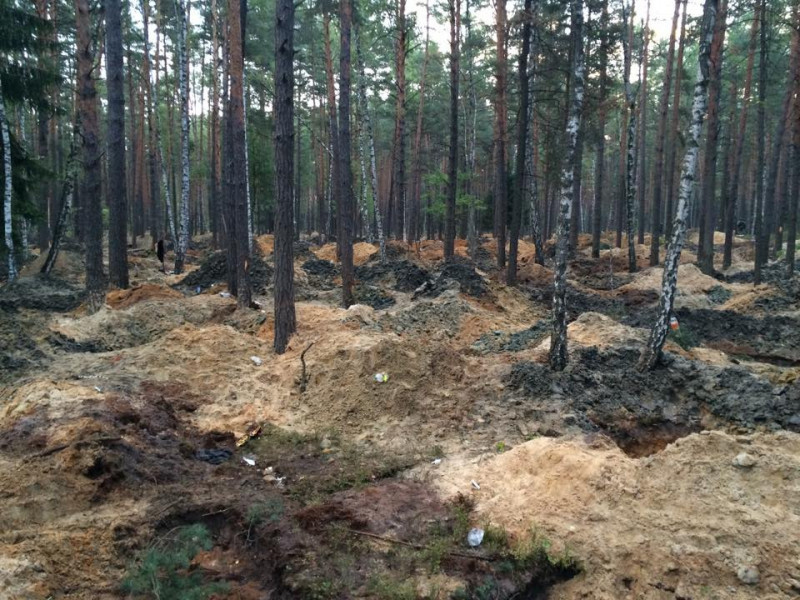 Так виглядає ліс після бурштинокопачів