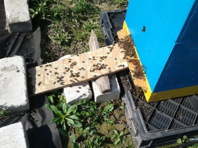 Поблизу сіл Літин та Новий Двір загинуло майже чотири сотні сімей бджіл