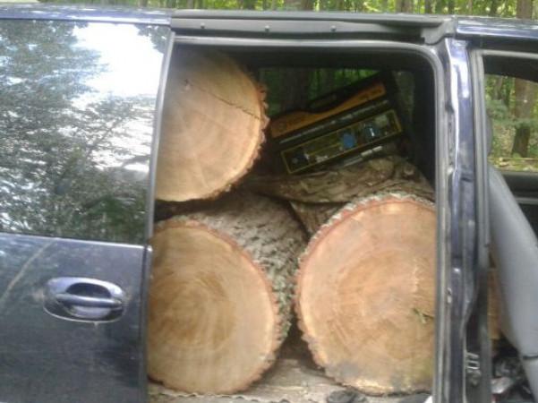Бус із вкраденою деревиною