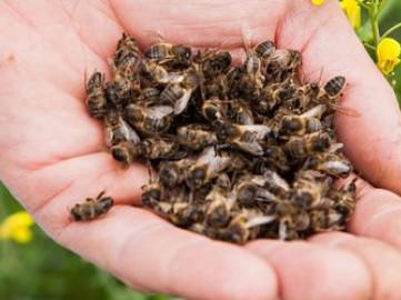 З'ясували причину загибелі бджіл