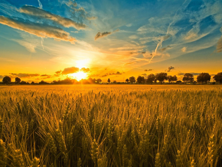 В силу ступає закон про єдиний масив сільськогосподарських земель