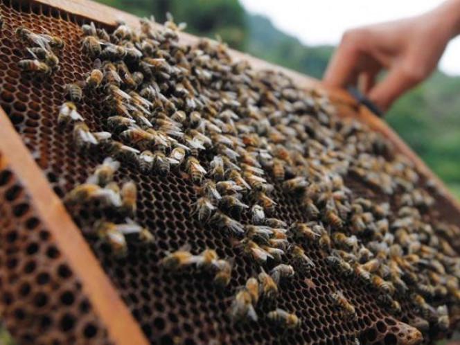 В Україні бджолярі протестують щодо застосування інсектицидів