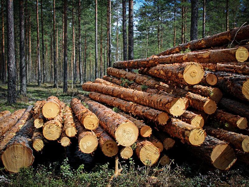 Волинський ліс