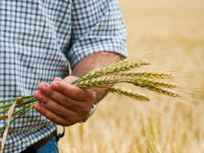 Волинян запрошують прослухати серію вебінарів на тему аграрних розписок