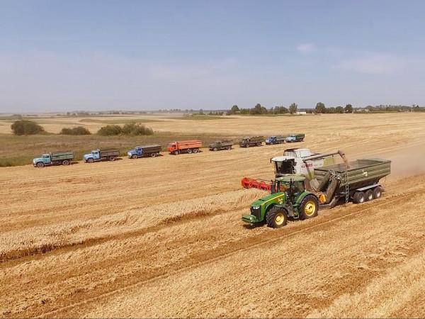 Волинське підприємство увійшло у десятку найпотужніших зернових заводів в Україні
