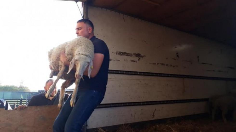 Фермер Олександр Джус отримав 30 овець