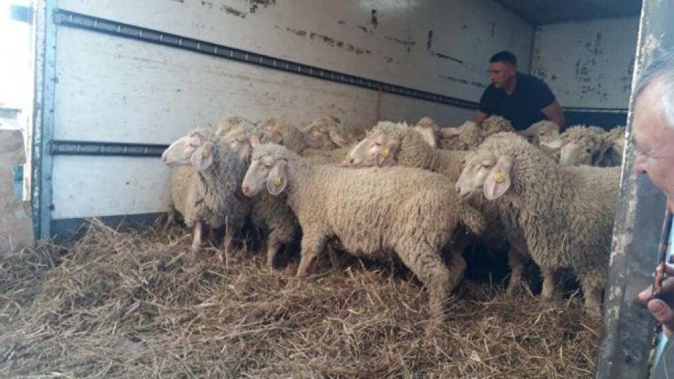 Олександр Джус виграв 30 овець на телешоу «Громада на мільйон»