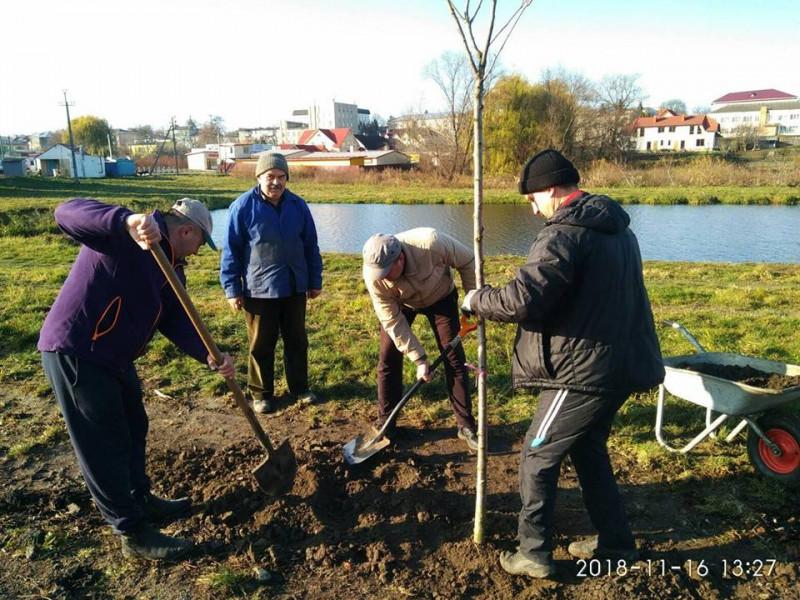 У Горохові біля ставка посадили дерева