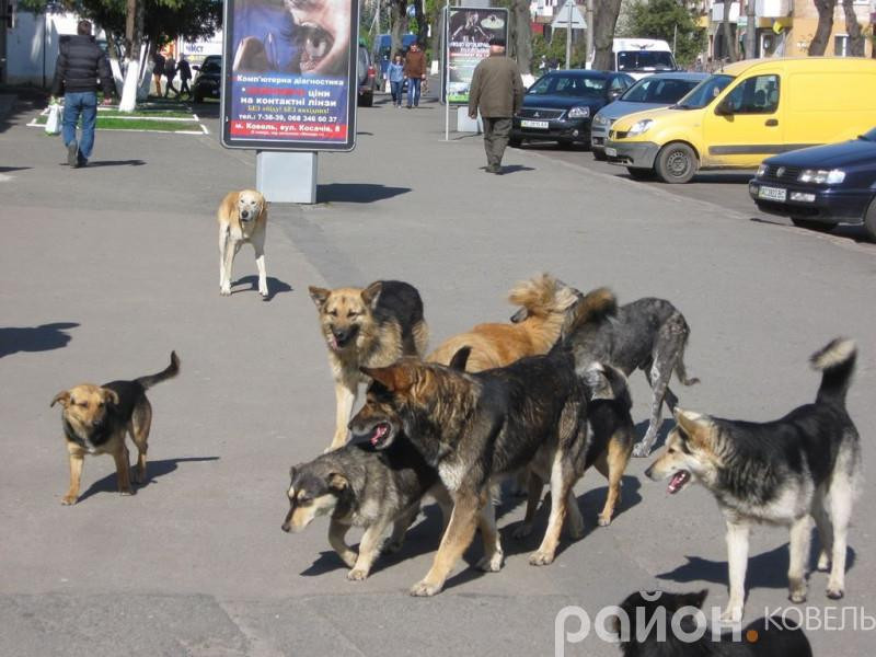 Ковельський «Добробут» не має ліцензії на стерилізацію безпритульних тварин