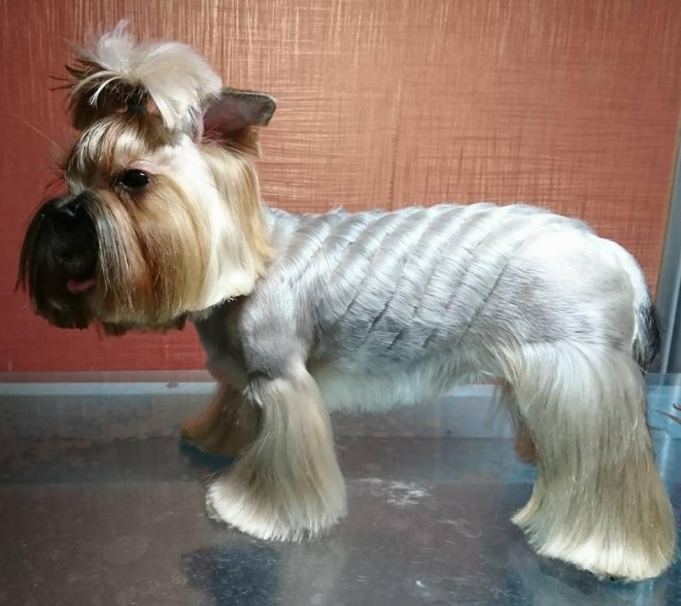 Зачіска для собачки від «Гармонії»
