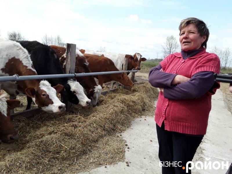 як сім'я чернігівського фермера почала виробляти молоко екстра класу