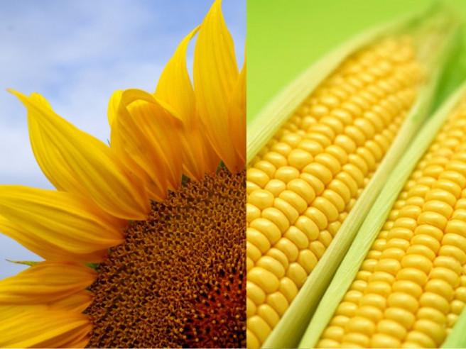 Аналіз клімату, підготовка землі і збір урожаю — поради поліським агрономам