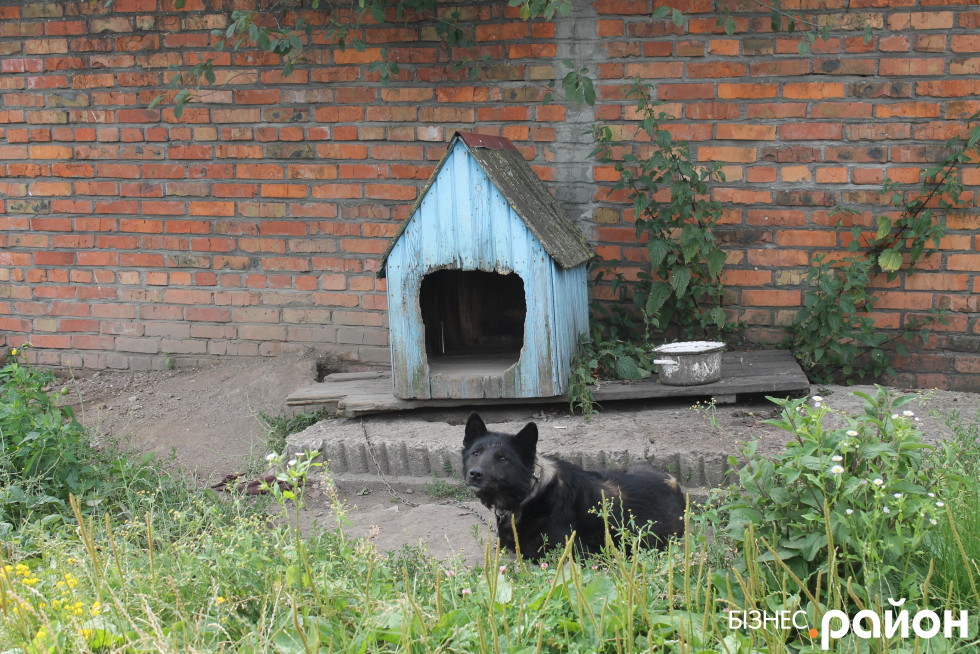Привітний пес охороняє територію
